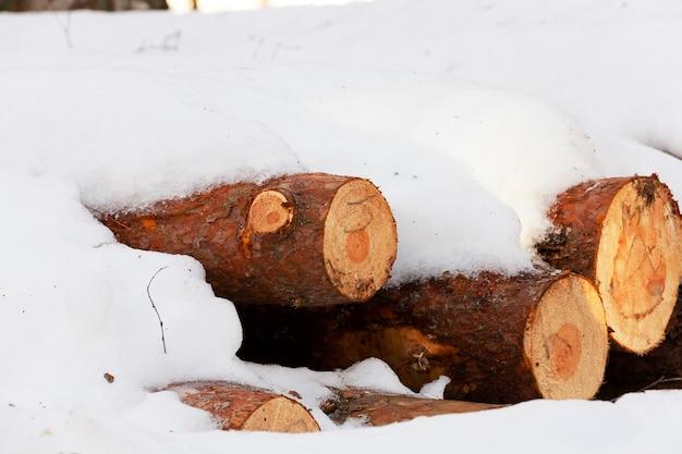 Gefällte bäume und in der wintersaison zusammengestapelt. mit schnee bedeckt