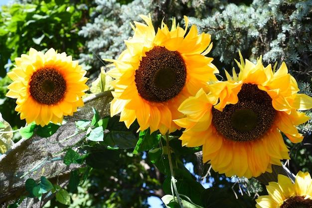 Gefälschte handgemachte sonnenblumen für die gartendekoration