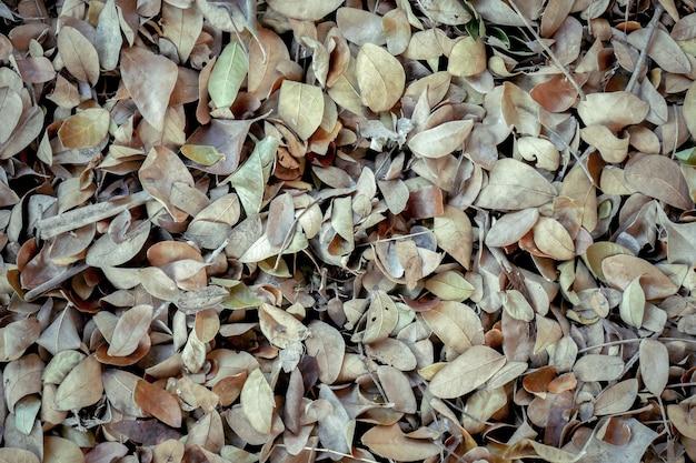 Gefallende blätter des abstrakten hintergrundbeschaffenheitsherbstes verlässt auf braunem waldboden