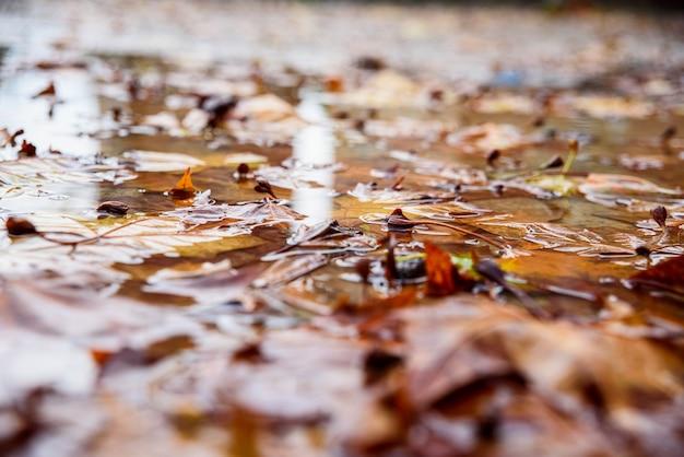 Gefallene blätter auf einer nassen pfütze in einem park im winter.