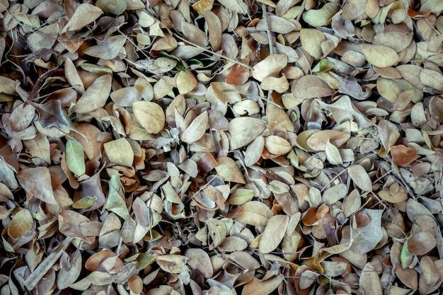 Gefallene blätter des abstrakten hintergrundbeschaffenheitsherbstes auf braunem waldboden