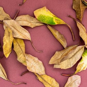 Gefallene walnussbaumblätter auf blassrosa hintergrund verstreut