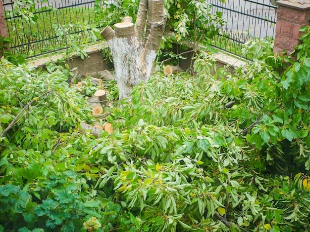 Gefallene zweige mit laub auf einem privaten grundstück. bäume auf dem gelände fällen.