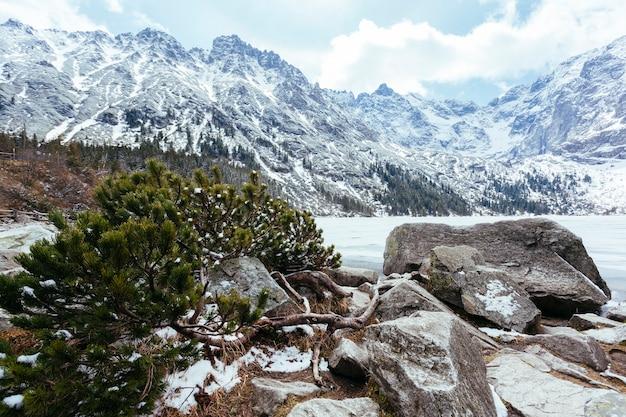 Gefallener grüner fichtenbaum nahe dem see im winter