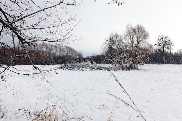 Gefallener weißer schnee nach einem schneefall und bäume ohne blätter im winter, tageslicht bei bewölktem wetter