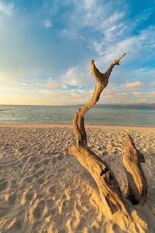 Geflochtener baum am strand bei sonnenuntergang