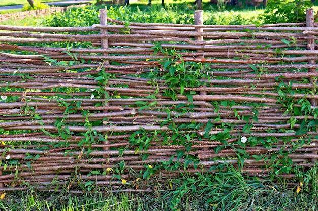 Geflochtener weidenzaun, geflochtene ackerwinde vor einem hintergrund von grünem gras