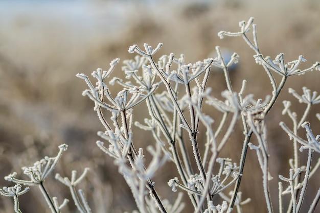 Gefrorene anlagen am frühen morgen schließen oben im winter