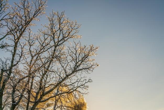 Gefrorene bäume im winter mit blauem himmel