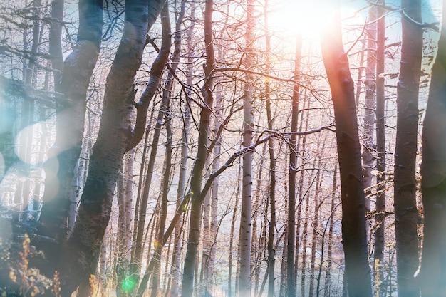 Gefrorene bäume im winterwald