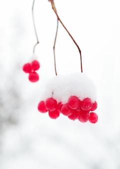 Gefrorene beeren auf den zweigen im schnee.