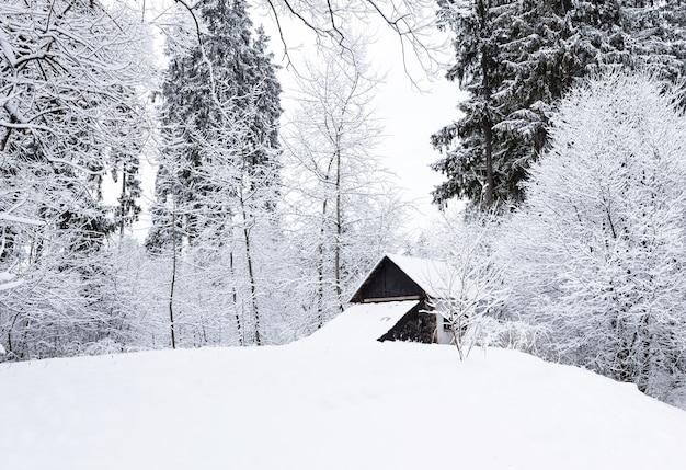 Gefrorene hohe kiefern und kleines holzhaus im schnee, dorf vatra dornei in rumänien