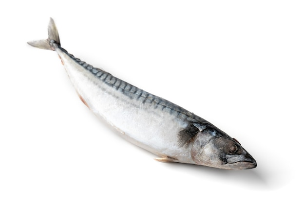 Gefrorene makrele isoliert auf weißer oberfläche.