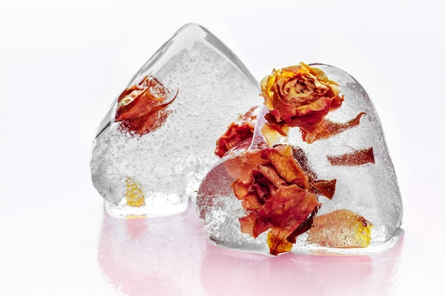 Gefrorene rose im eiswürfel