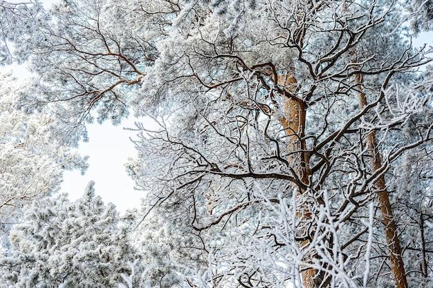 Gefrorener baum auf weißem winterhimmel. frostiger tag, ruhige winterszene. toller blick auf die wildnis.