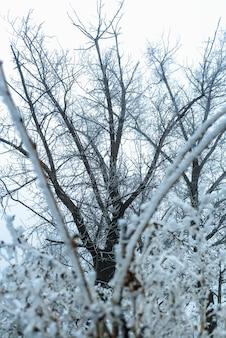 Gefrorenes eis bedeckte buschbäume. der winter beginnt