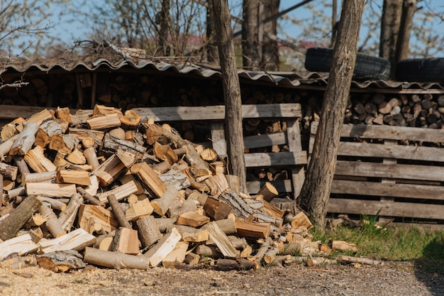 Gehacktes brennholz von verschiedenen baumarten.