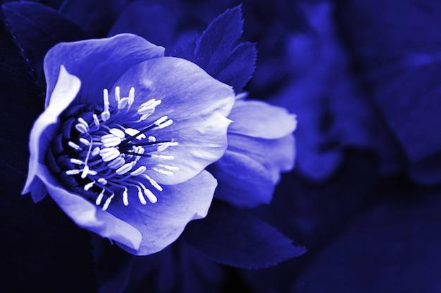 Geheimnisvolle blume im mondlicht im dunkelblauen wald bei nacht