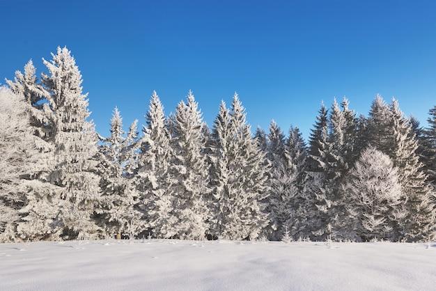 Geheimnisvolle winterlandschaft majestätische berge im winter. magischer schneebedeckter winterbaum. karpaten. ukraine