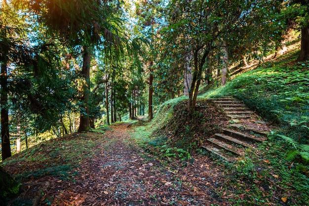 Gehen auf spur in einem grünen geheimnisvollen ruhigen wald