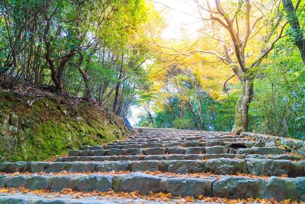 Gehen sie mit roten ahornblättern, die bei arashiyama blühen