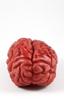 Gehirn prop