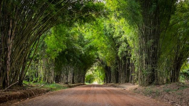 Gehweg flankiert auf beiden seiten mit einem bambuswald