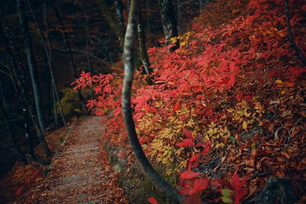 Gehweg im herbstwald mit roten und gelben blättern