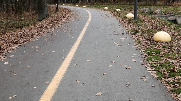Gehweg im park mit gelber markierungslinie auf dem asphalt. im hintergrund sind bäume und sträucher bereits in gelben und orangefarbenen blättern. warmes wetter, sonniger tag. herbst leerer park ohne leute.