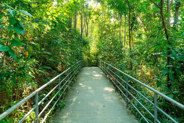Gehweg im wald bei canopy spaziergängen im botanischen garten der königin sirikit chiang mai, thailand