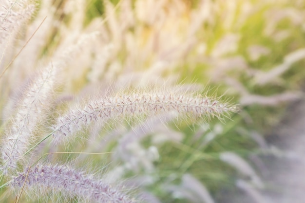 Gehweg mit gras neben dem weg auf dem hügel