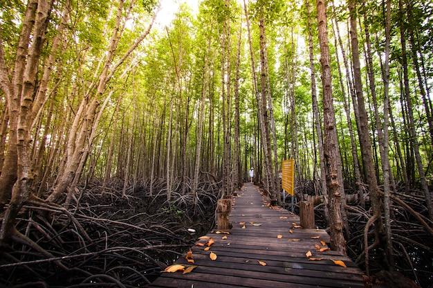Gehwegholzbeschaffenheit eine natürliche die straße ist grün.