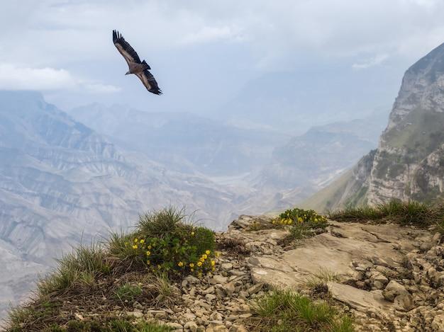 Geier fliegt über die klippe. wunderschöne landschaft auf dem verregneten hochplateau.
