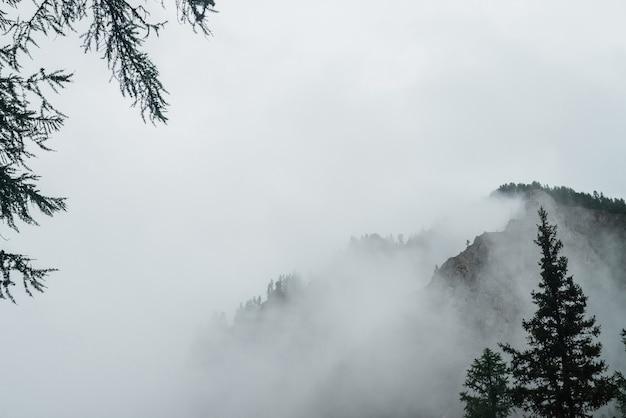 Geisterhafter blick durch äste und dichten nebel zu wunderschönen rocky mountains