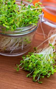Gekeimte frische und rohe alfalfasprossen. gesunde und gesunde ernährung. nahansicht.