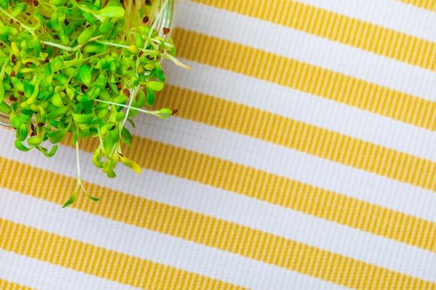Gekeimte frische und rohe alfalfasprossen.