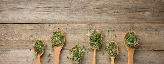 Gekeimte grüne sprossen von chia, rucola und senf in einem holzlöffel auf einer grauen oberfläche von alten brettern, draufsicht. nützliche ergänzung für lebensmittel, die die vitamine c, e und k enthalten