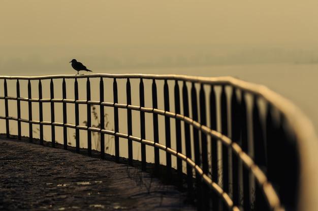 Geländergeländer handlauf und vogel