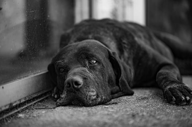 Gelangweilter hund ruhen