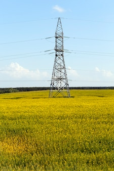 Gelb blühendes rapsfeld und metallstangen der elektrischen leitungen bei bewölktem wetter. landschaftsfoto