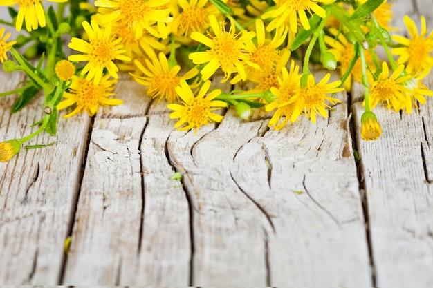 Gelb blüht nahaufnahme auf rustikalem hölzernem hintergrund