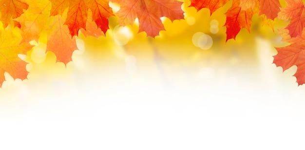 Gelb-orange ahornblätter auf einem hintergrund der herbstnatur mit bokeh und kopienraum. banner-format
