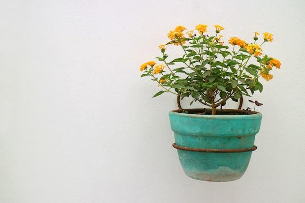 Gelb-orangee lantana-blumen im türkis-pflanzer, der an der weißen wand hängt