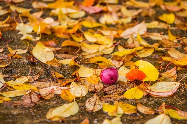 Gelbe ahornblätter und äpfel. park in der herbstsaison