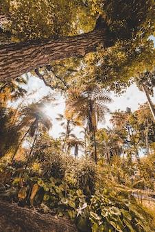 Gelbe bäume des niedrigen winkels im wald in funchal, madeira, portugal