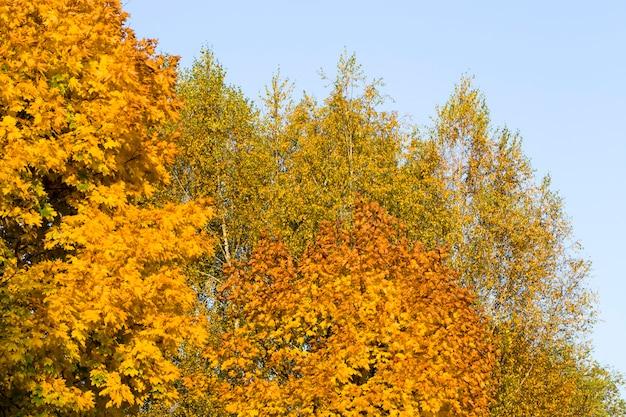 Gelbe bäume im park
