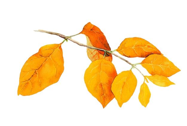 Gelbe blätter am ast. botanische illustration des aquarellherbstes