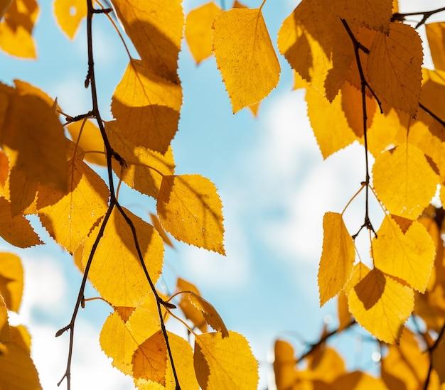 Gelbe blätter an einem sonnigen herbstmorgen gegen blauen himmel mit wolken.