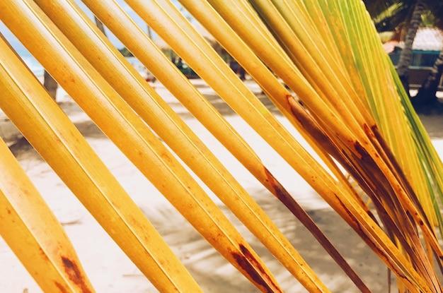Gelbe blätter der palme am goldenen strand