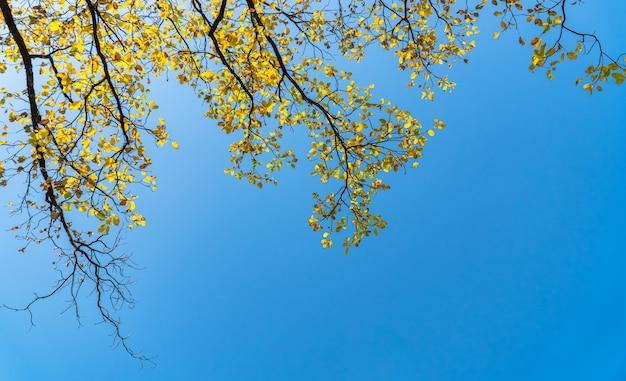 Gelbe blätter im herbst auf blauem himmelhintergrund